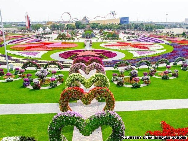 Сад живых цветов