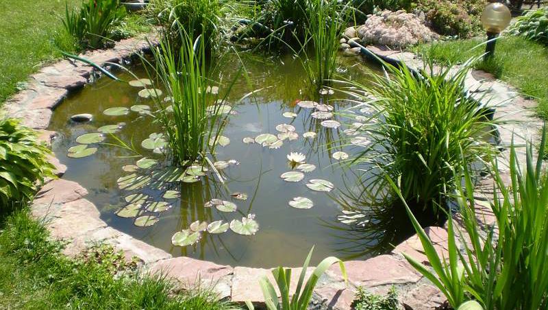 Искусственный пруд на садовом участке