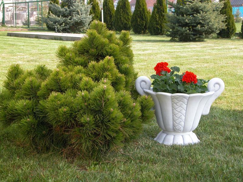 Как расположить в саду вазоны для цветов цветочные вазоны