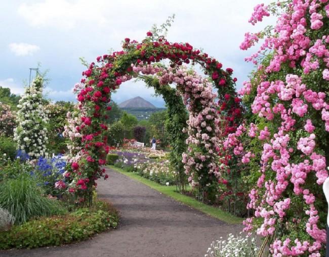 арка, свадебная арка, арка своими руками, вертикальное озеленение