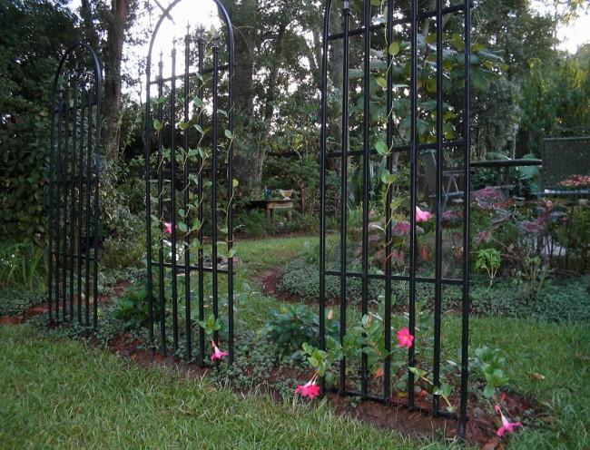 шпалера, вертикальное озеленение, цветы, фото