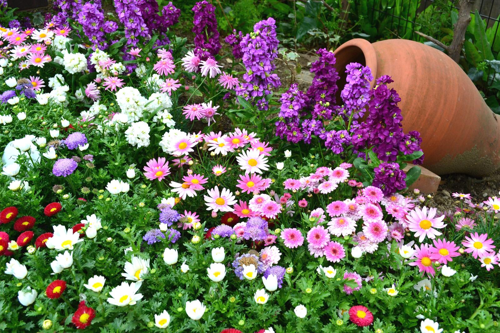 много цветов цветник вазон красивый сад