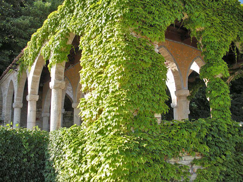 Вертикальное озеленение сад своими руками