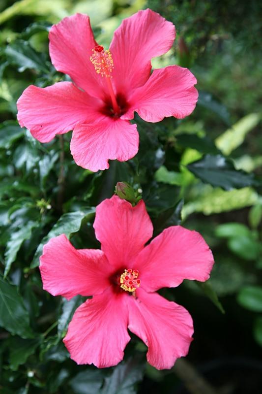 красивый сад цветник