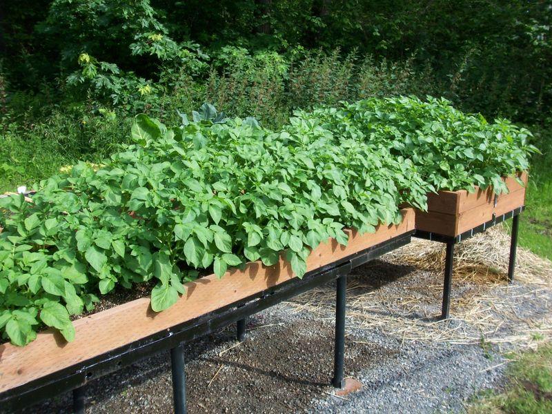 Выращивание овощей в ящиках красивый сад своими руками