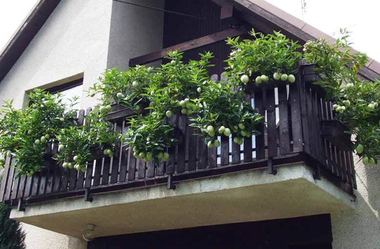 мини огород на балконе красивый сад своими руками