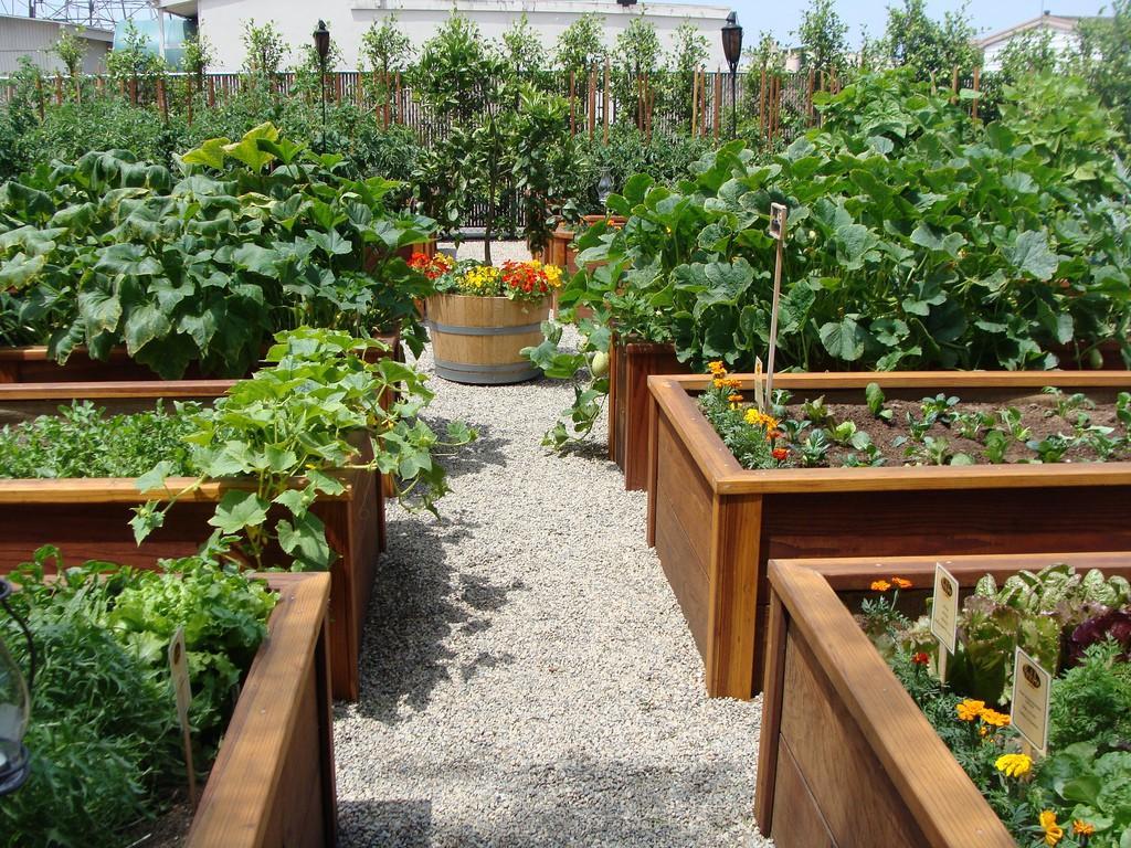 высокие грядки красивый сад своими руками