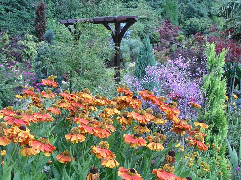 красивый сад цветник газон садовая дорожка вертикальное озеленение шпалера для растений