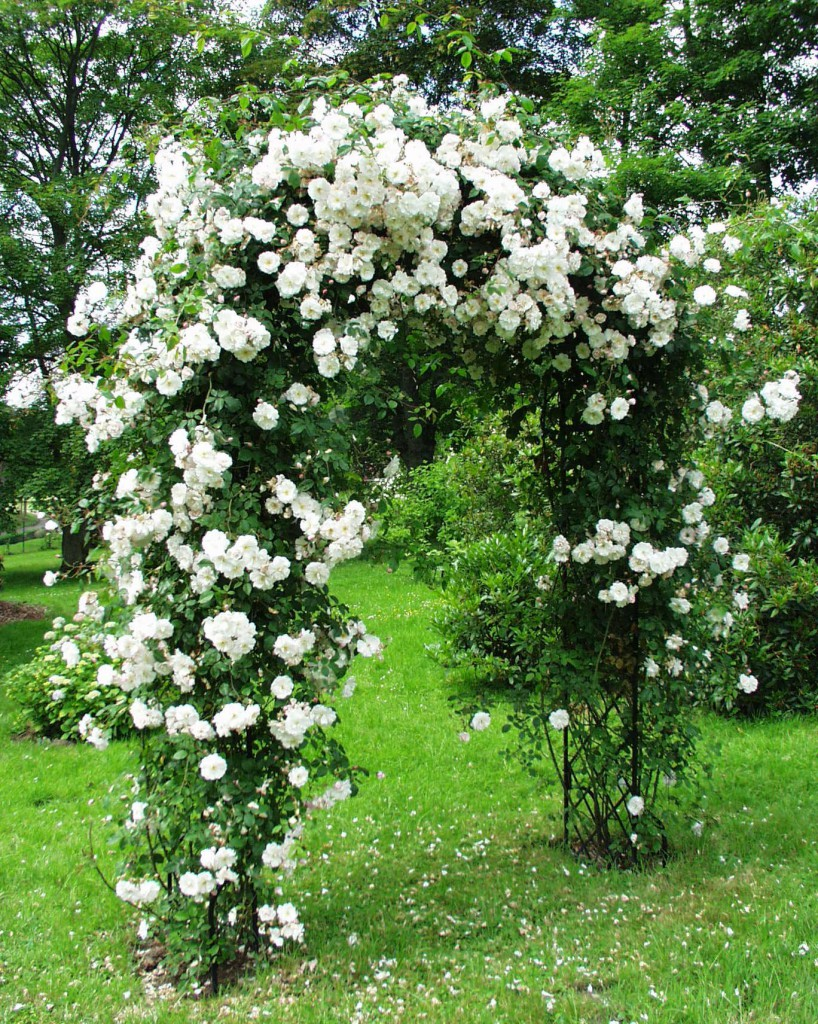 арка для сада садовая арка