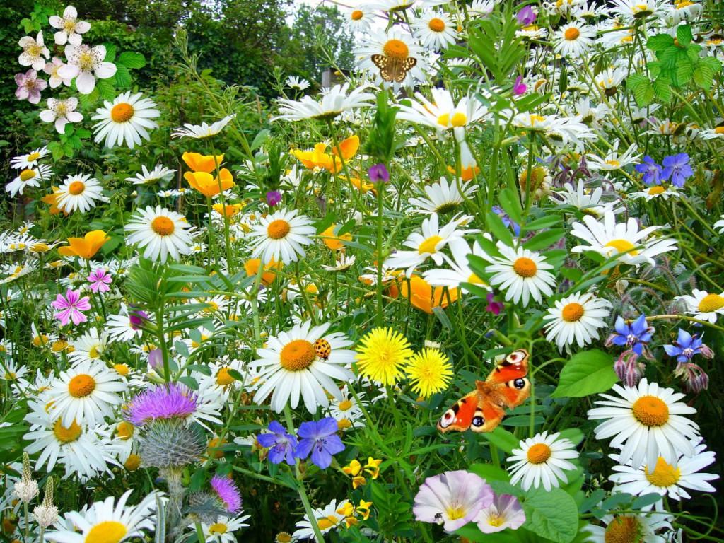 цветы бабочки красивый сад