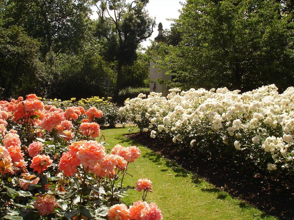 Риджентс парк Англия Regent's Park розы шпалеры