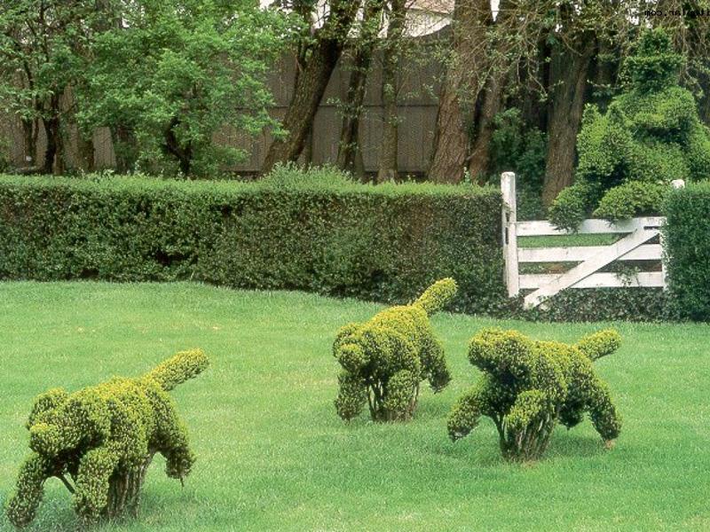 топиари в саду на участке своими руками