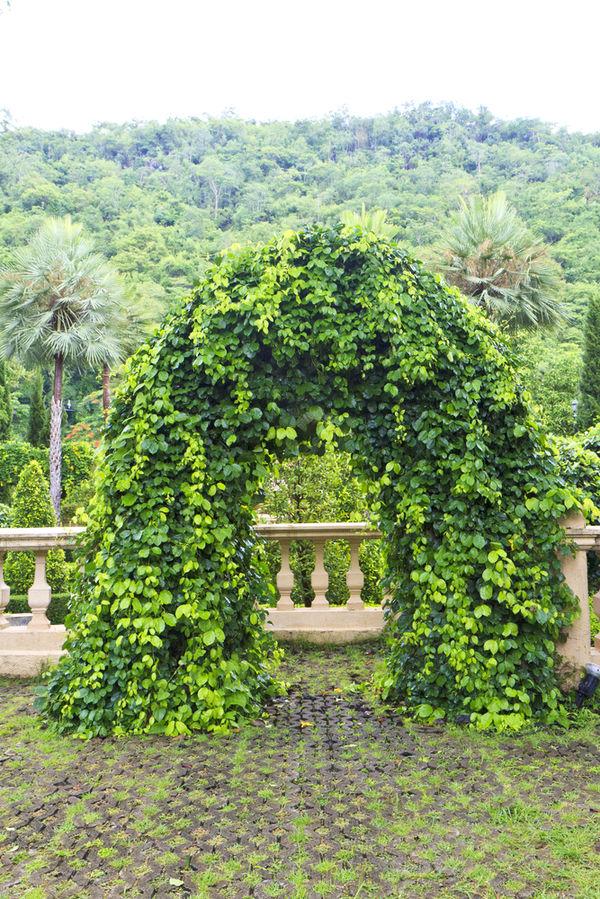 садовая арка на балконе на веранде арка для сада