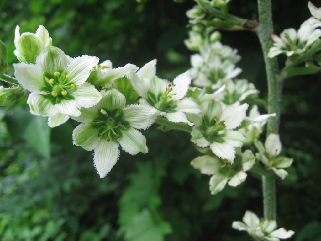 Сад ядовитых растений Альнуик Нортумберленд