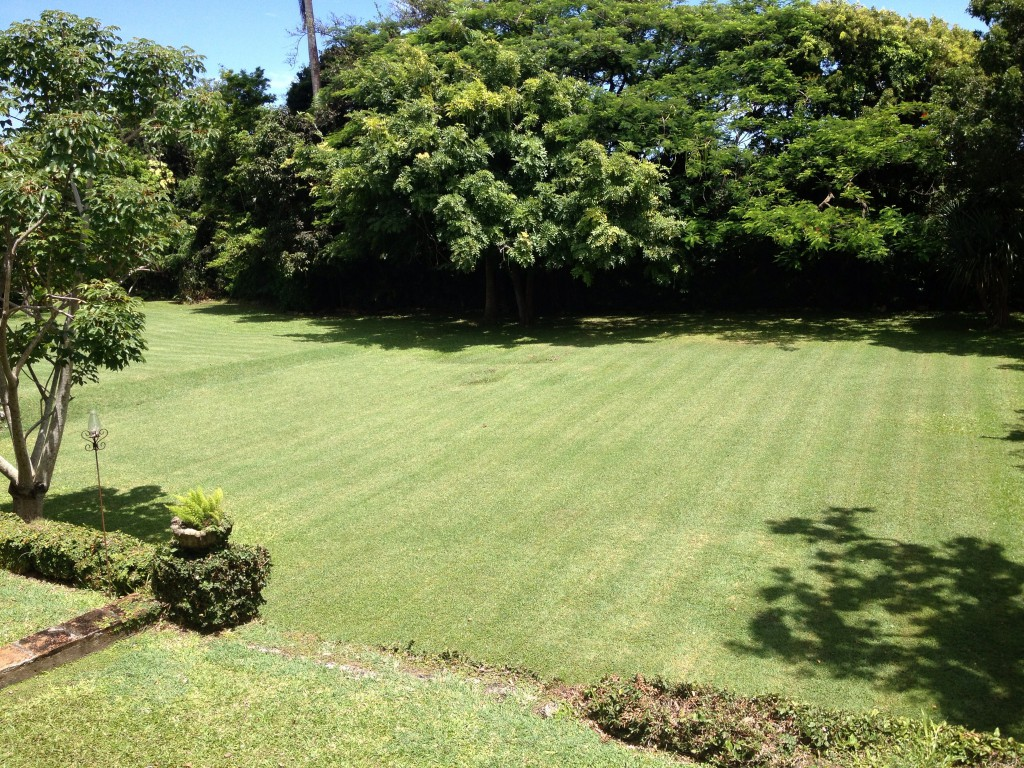 Сlifton Hall красивый сад зеленый газон красивое фото