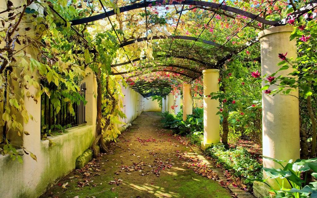 вертикальное озеленение арка красивый сад
