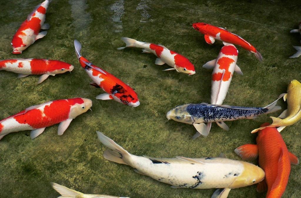 пруд на участке своими руками разведение рыбы