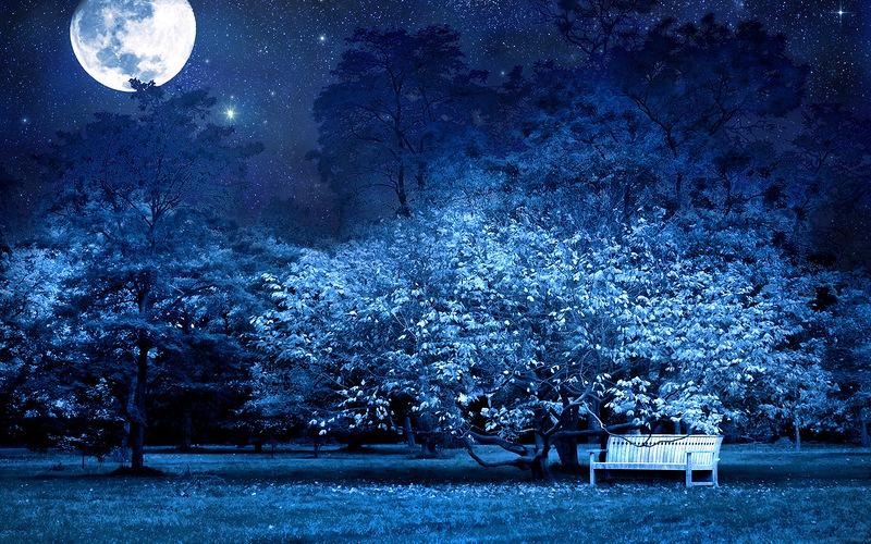 лунный сад, сады ночью, ландшафтный дизайн, освещение сада