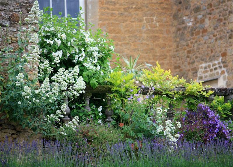 ascot garden красивый сад