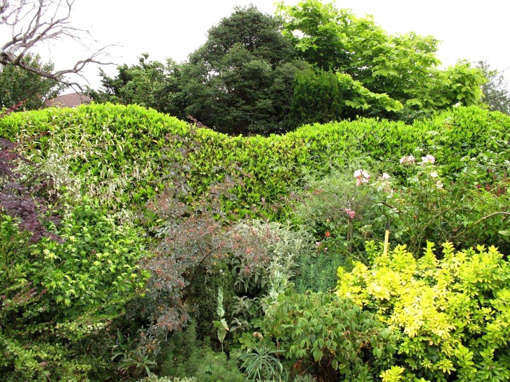 красивый сад рядом с дорогой своими руками