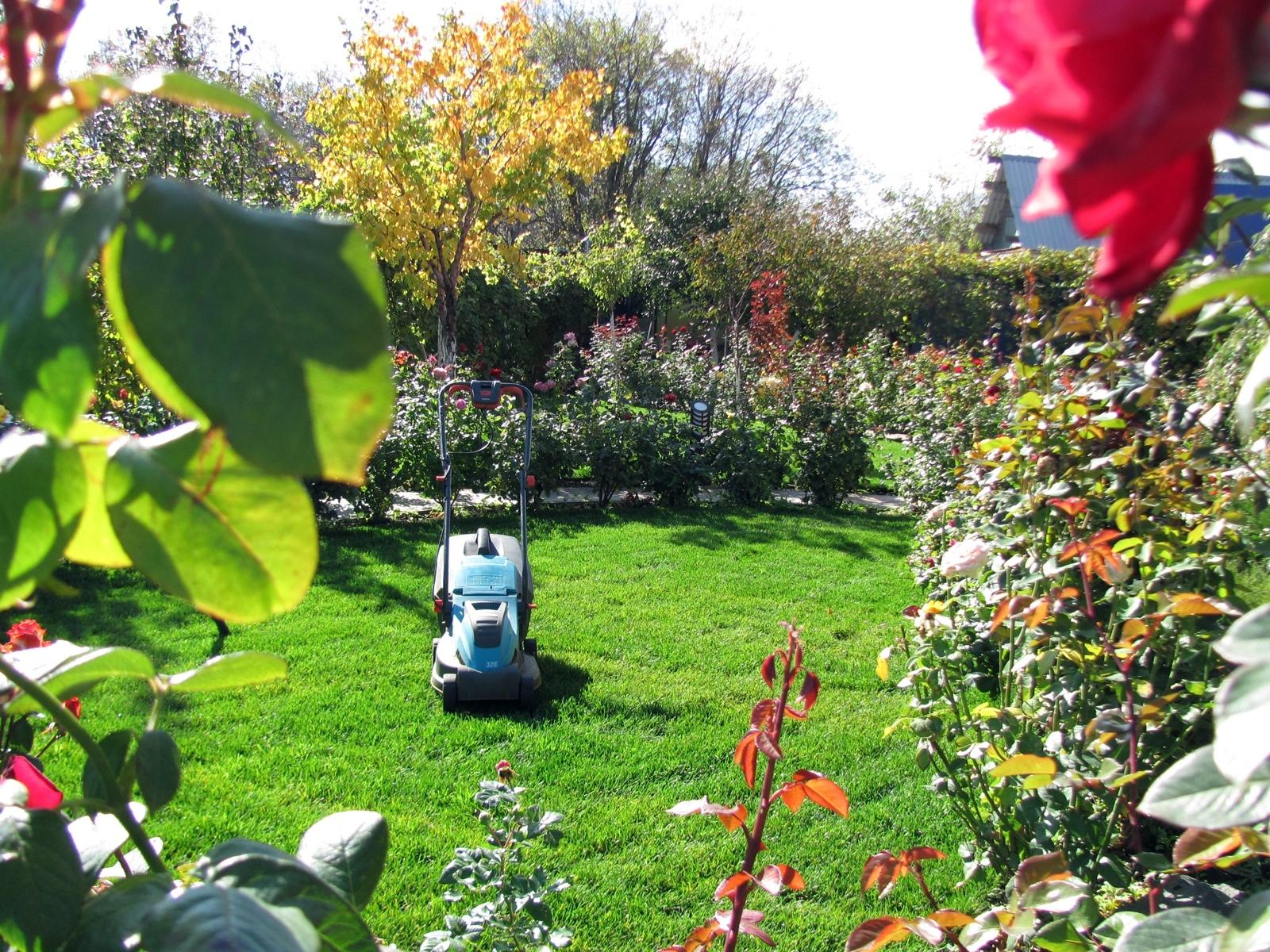 сад рядом с дорогой растения для сада