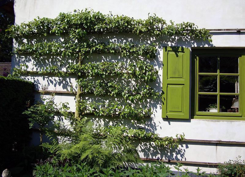 шпалеры вертикальное озеленение украшение стен