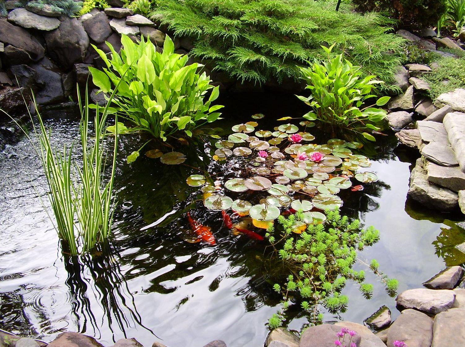 съедобные растения для водоема на участке