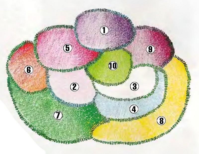 цветник для ленивых своими руками схема