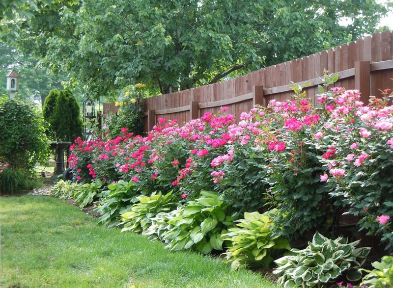 украшаем забор цветами своими руками цветники у забора