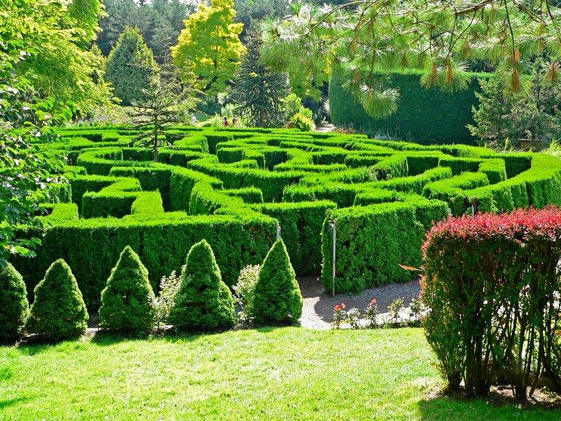 лабиринт, сда лабиринт, садовый лабиринт, ландшафтный дизайн