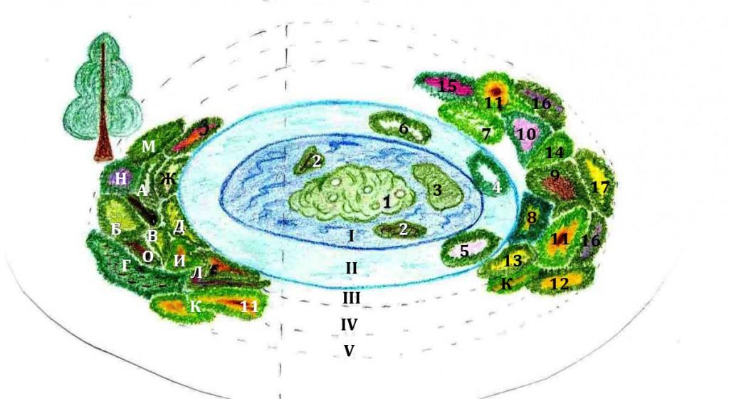 как посадить растения у водоема схема
