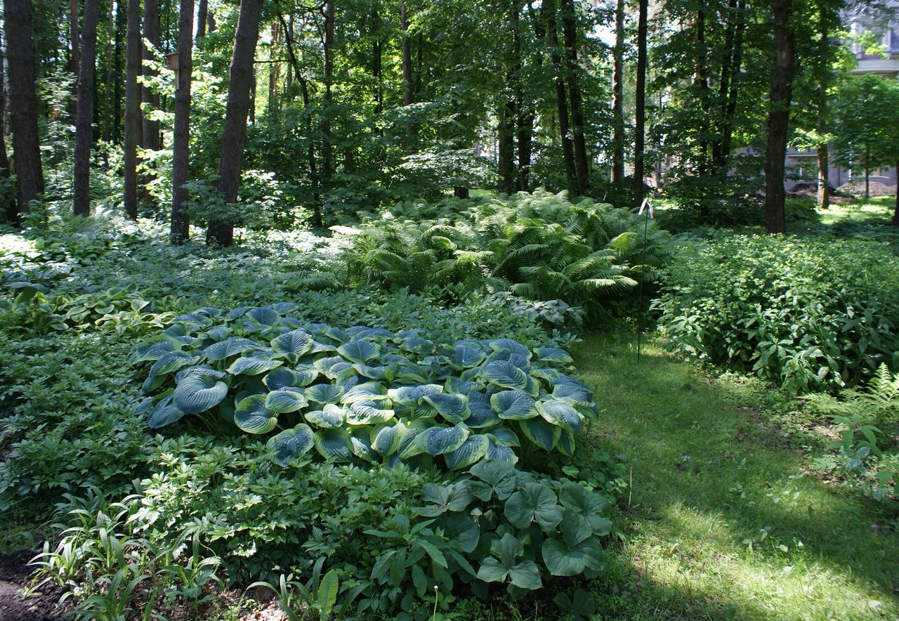 декоративно-лиственный сад своими руками