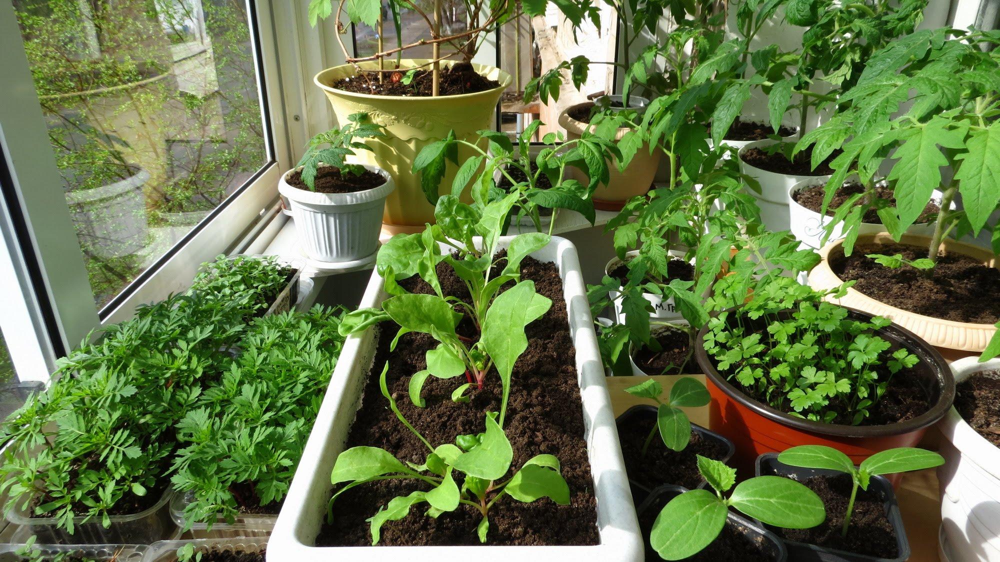 Выращивание цветов на балконе для начинающих.