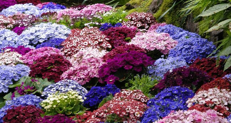 цветы нескольких оттенков в клумбе