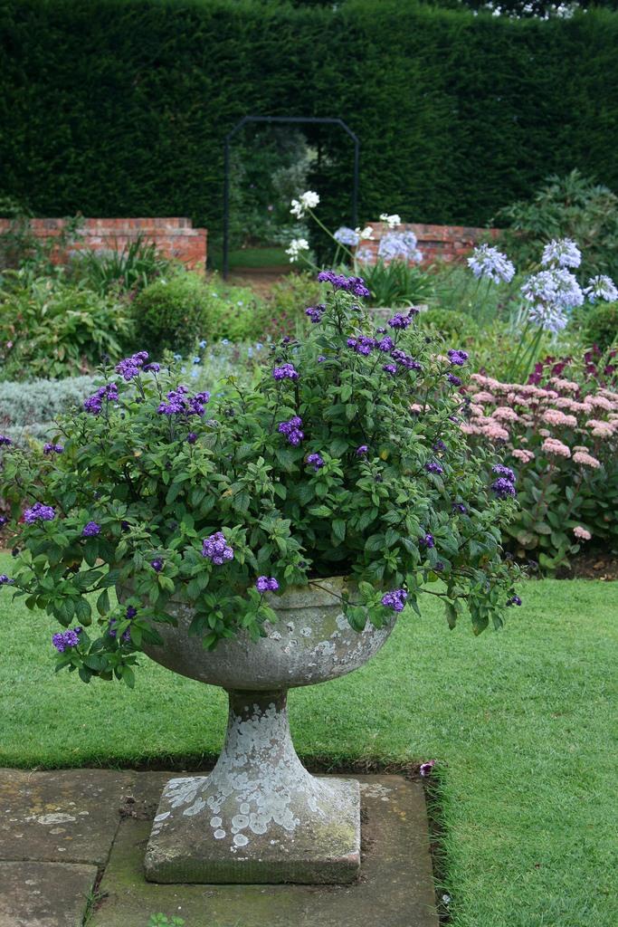 сады Котон Манорс Англия вазон