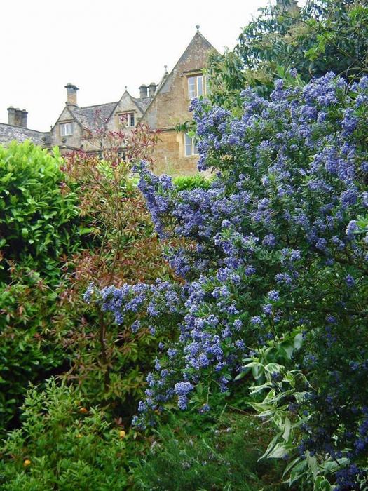 сады Бартон Хаус Англия Barton House красивый сад цветник газон