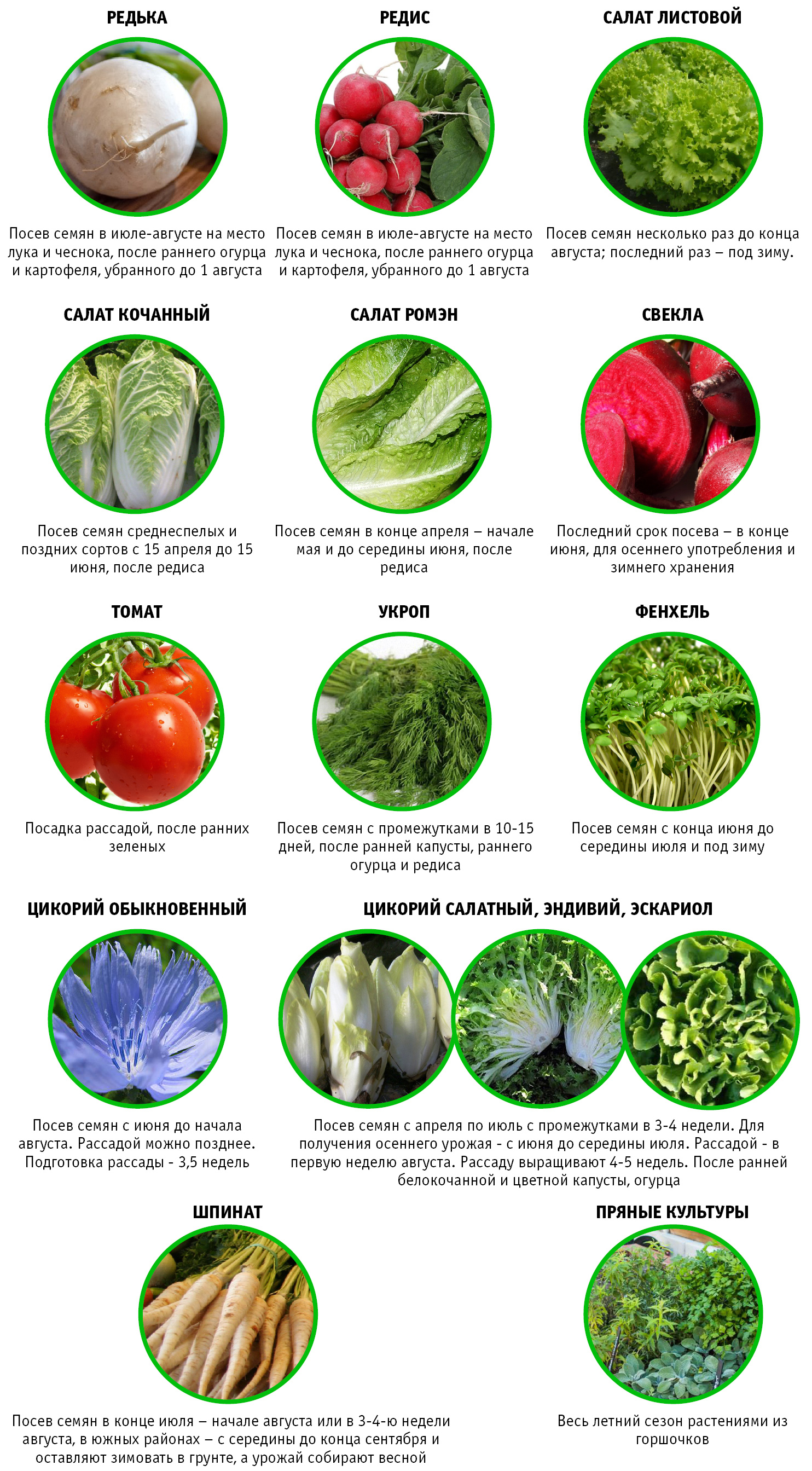сроки повторной посадки овощей