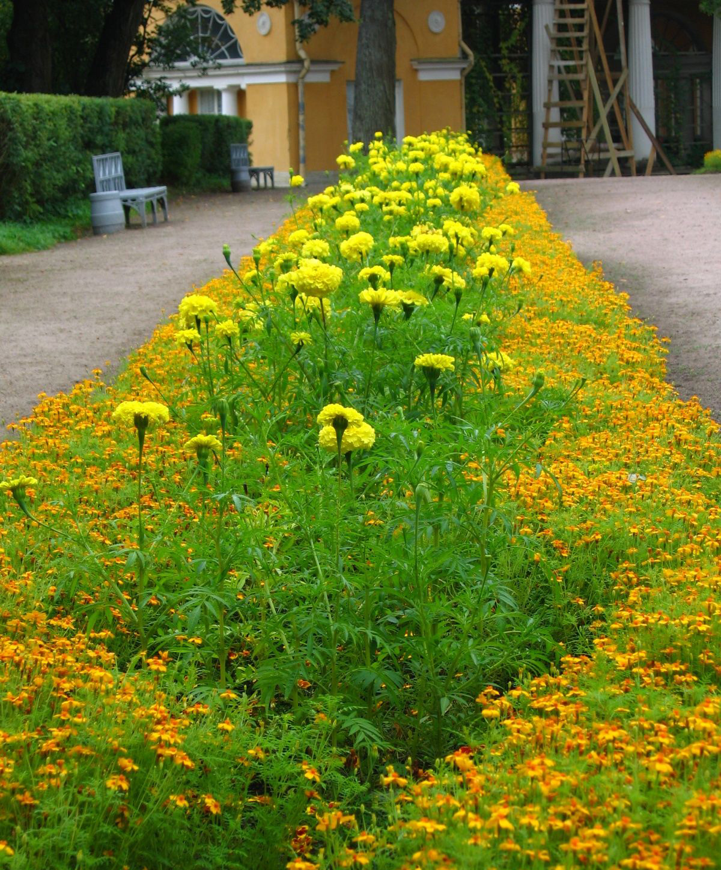как высаживать растения в цветниках своими руками