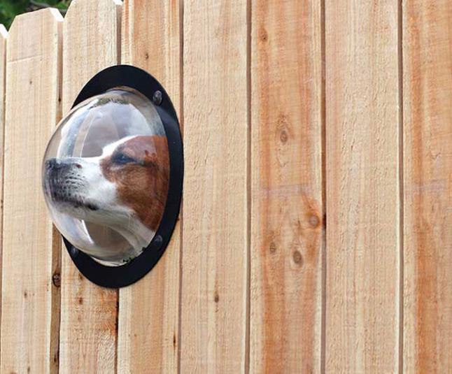 глухой забор собака