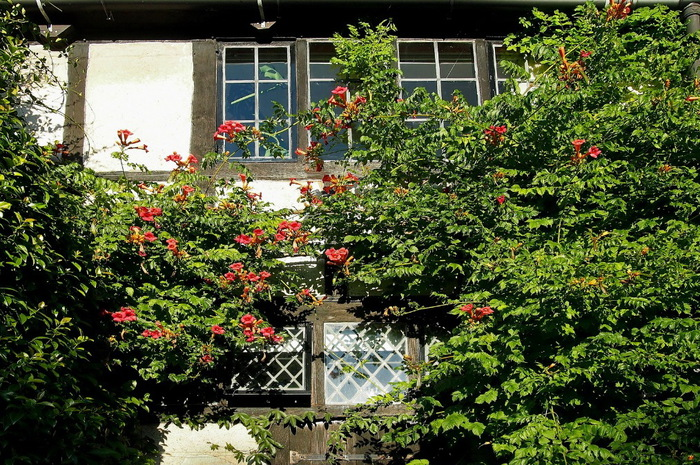 вертикальное озеленение балкон красивый сад сады Уизли Англия