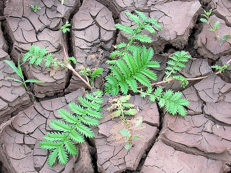 как повысить урожайность почвы