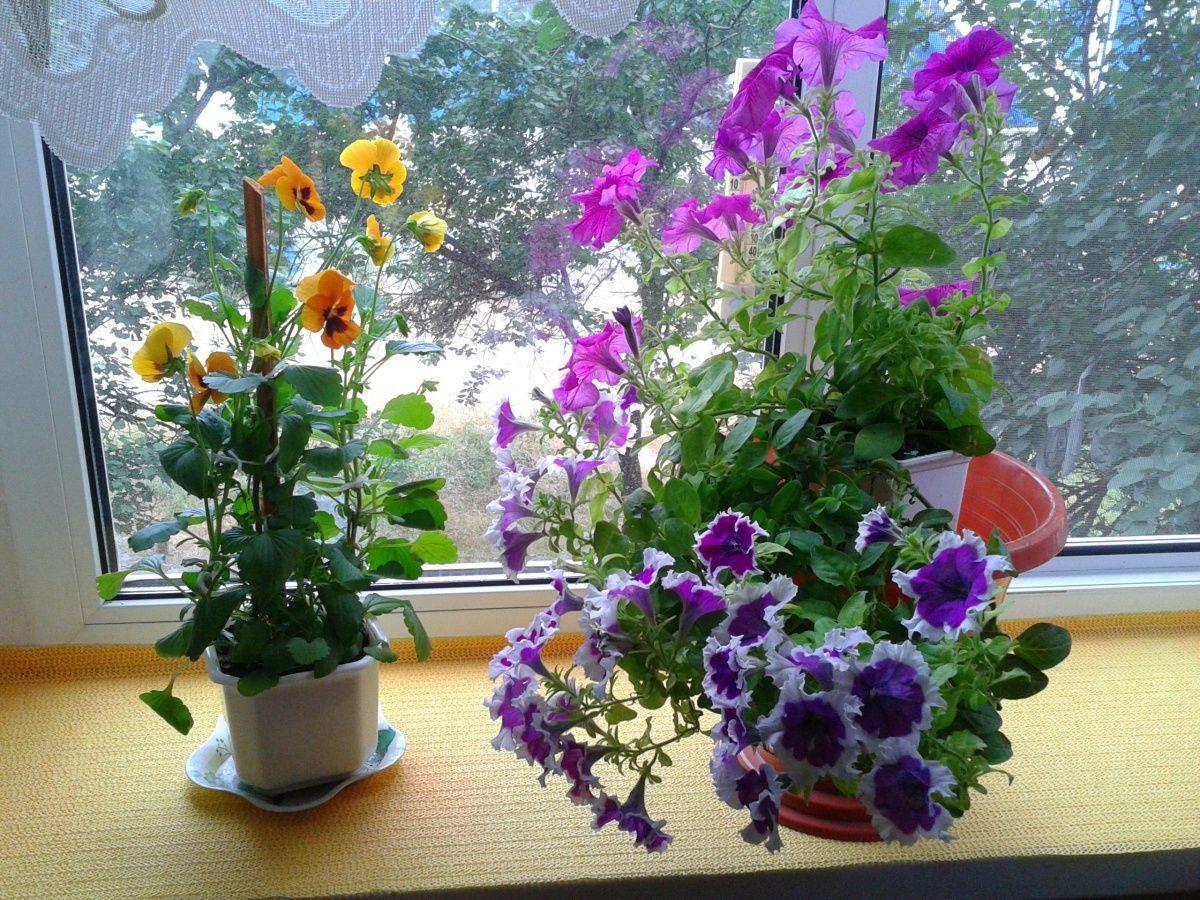 подкормка для комнатных растений своими руками