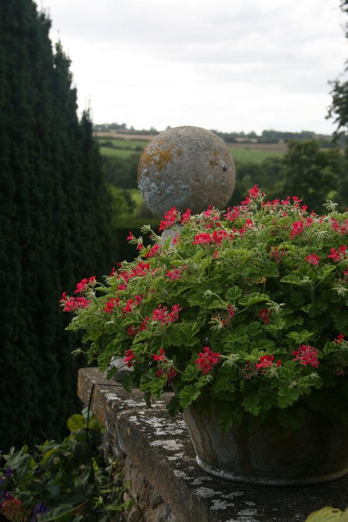 сады Котон Манорс Coton Manor Англия вазон красивый сад