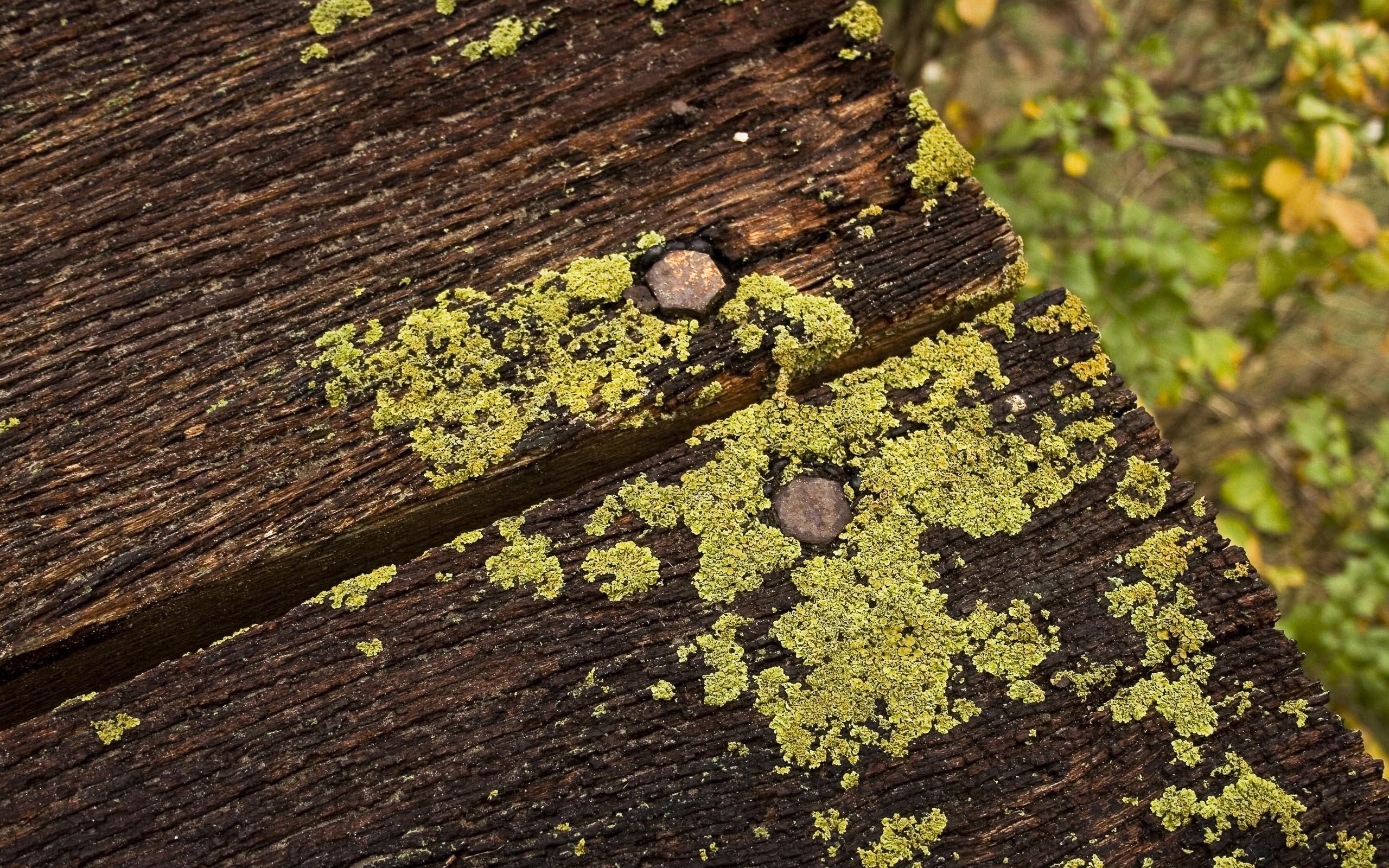 защита для деревянных покрытий от плесени грибка
