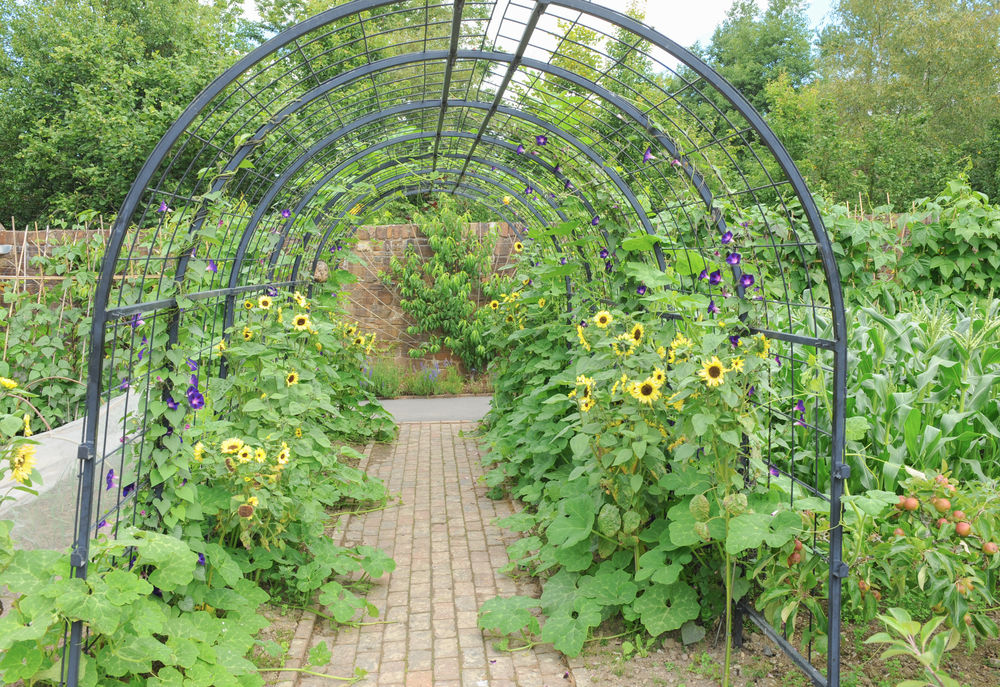 живые изгороди из овощей пергола