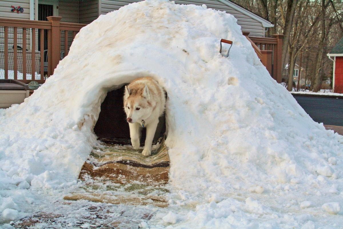 будка для собаки своими руками хаски сугроб