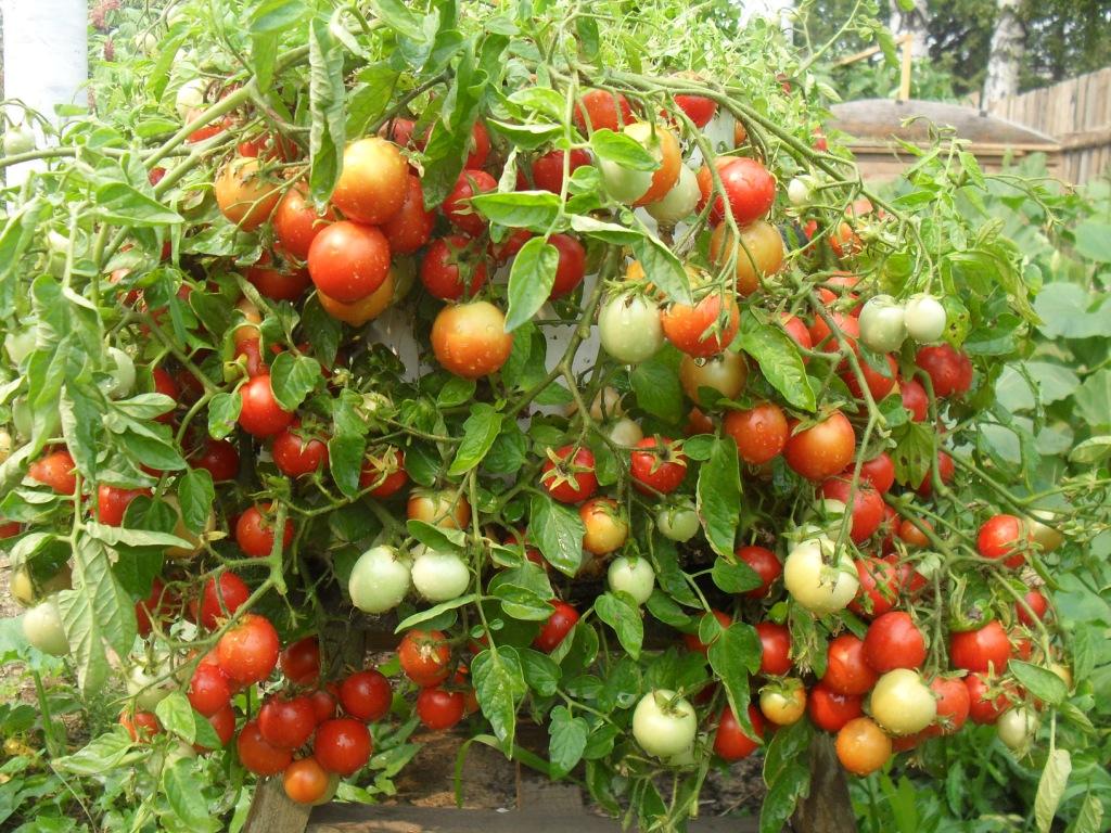 что можно выращивать на обработанной от солей почве