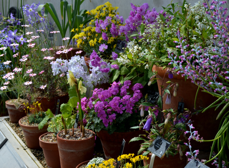 растения в вазонах