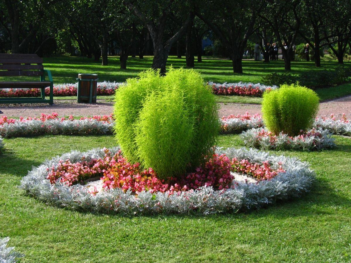 как размещать растения в цветниках своими руками
