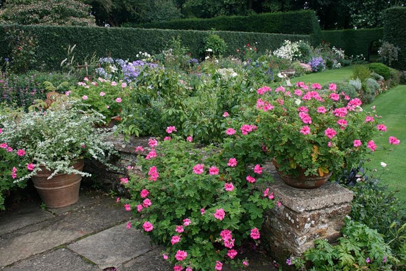 сады Котон Манорс Англия цветник